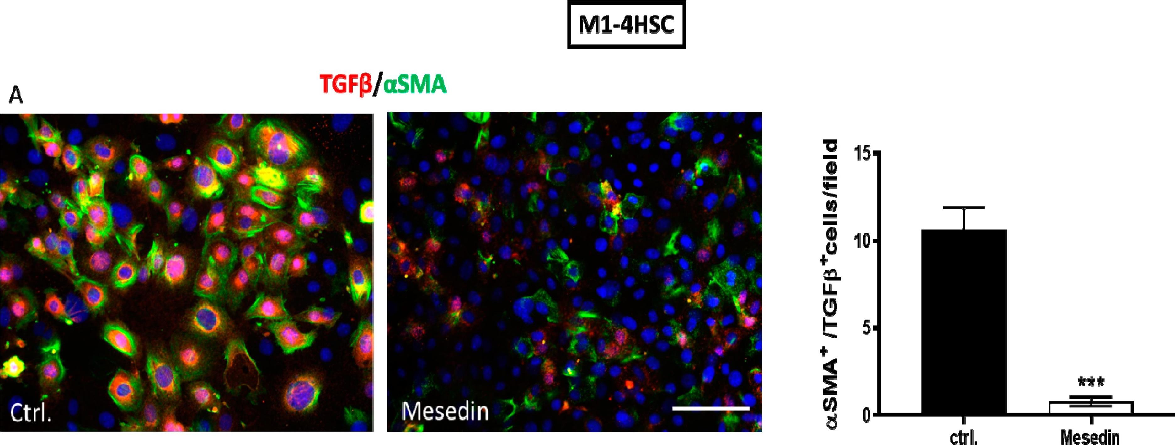α2-Adrenergic Receptor in Liver Fibrosis: Implications for the Adrenoblocker Mesedin.