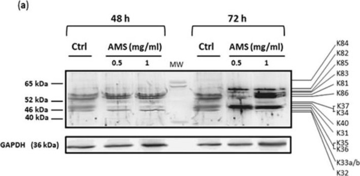 Induction of Hair Keratins Expression by an Annurca Apple-Based Nutraceutical Formulation in Human Follicular Cells.