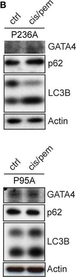 Live-Cell Mesothelioma Biobank to Explore Mechanisms of Tumor Progression.